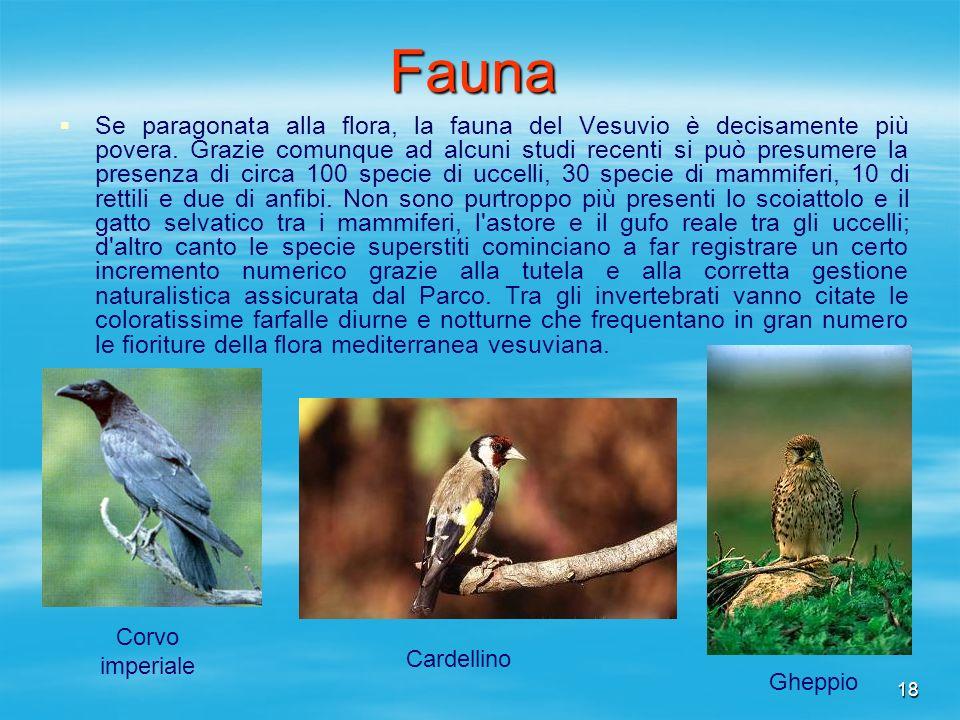 18Fauna Se paragonata alla flora, la fauna del Vesuvio è decisamente più povera. Grazie comunque ad alcuni studi recenti si può presumere la presenza