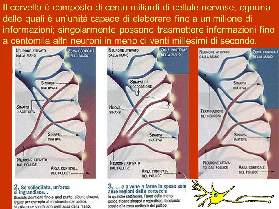 Il cervello è composto di cento miliardi di cellule nervose, ognuna delle quali è ununità capace di elaborare fino a un milione di informazioni; singolarmente possono trasmettere informazioni fino a centomila altri neuroni in meno di venti millesimi di secondo.