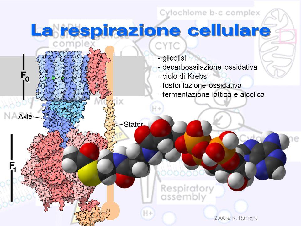 LA RESPIRAZIONE CELLULARE ossidazione riduzione FAD + 2H FADH 2