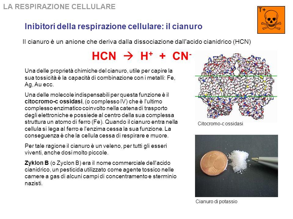 LA RESPIRAZIONE CELLULARE Schema riassuntivo della fermentazione
