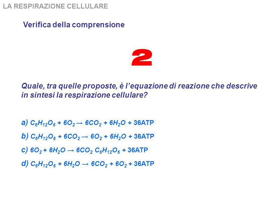 LA RESPIRAZIONE CELLULARE Verifica della comprensione Al termine della glicolisi e del ciclo di Krebs: a) tutta lenergia del glucosio è sotto forma di