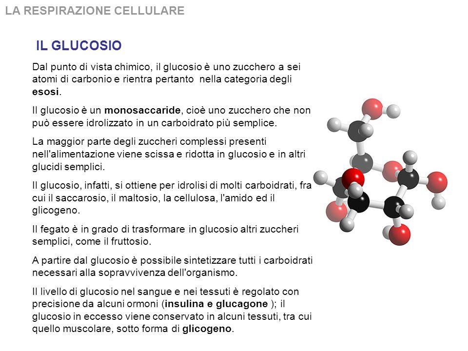 Dal punto di vista chimico, il glucosio è uno zucchero a sei atomi di carbonio e rientra pertanto nella categoria degli esosi.
