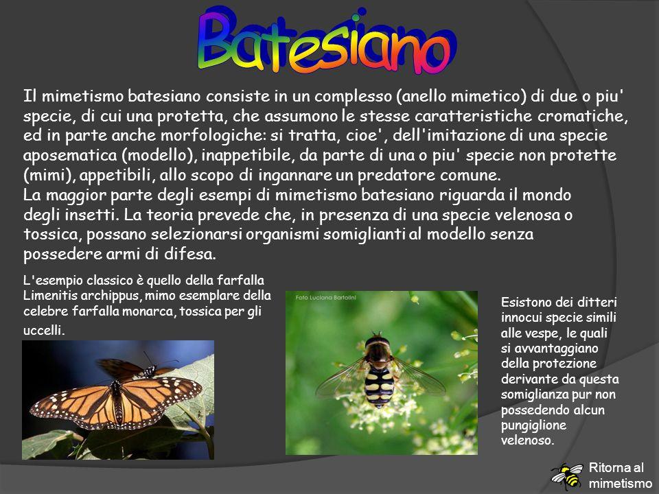 Il mimetismo batesiano consiste in un complesso (anello mimetico) di due o piu' specie, di cui una protetta, che assumono le stesse caratteristiche cr