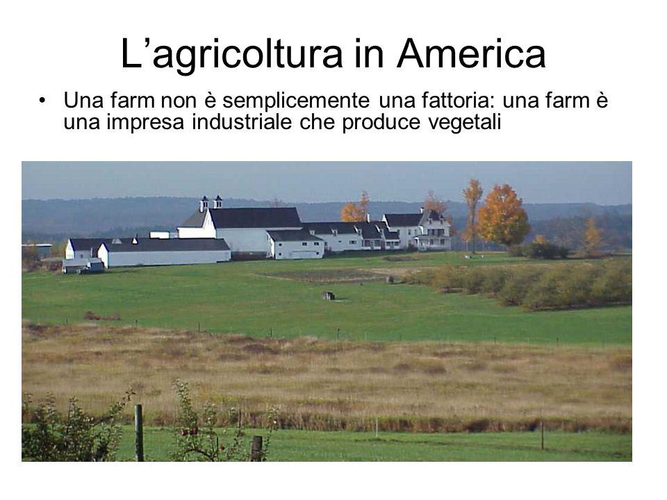 Lagricoltura in America Una farm non è semplicemente una fattoria: una farm è una impresa industriale che produce vegetali