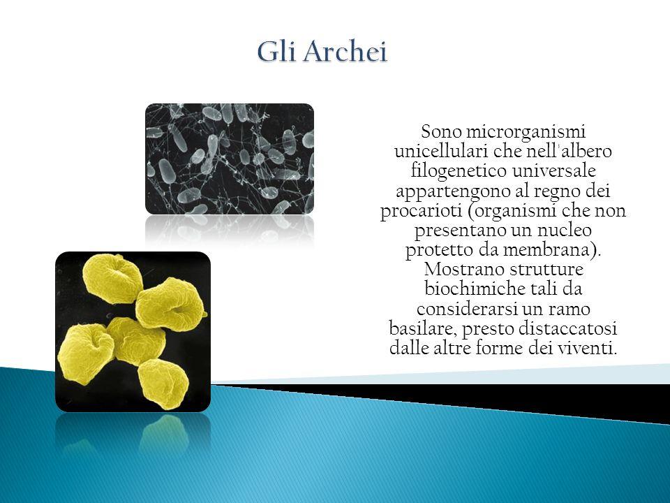 Sono microrganismi unicellulari che nell'albero filogenetico universale appartengono al regno dei procarioti (organismi che non presentano un nucleo p