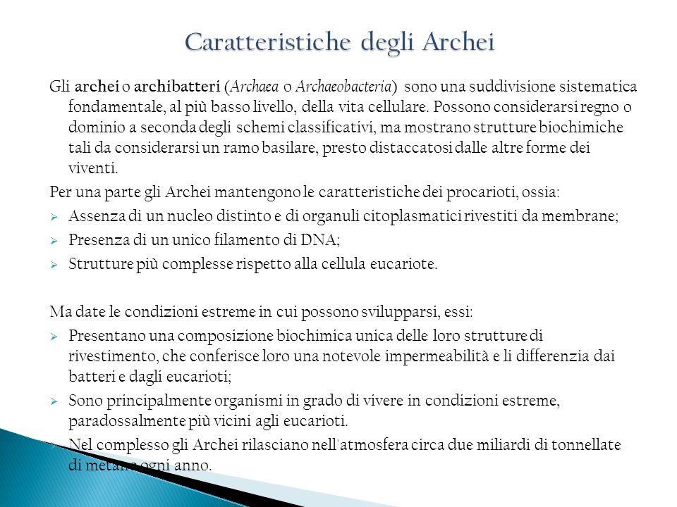 Gli archei o archibatteri ( Archaea o Archaeobacteria ) sono una suddivisione sistematica fondamentale, al più basso livello, della vita cellulare. Po