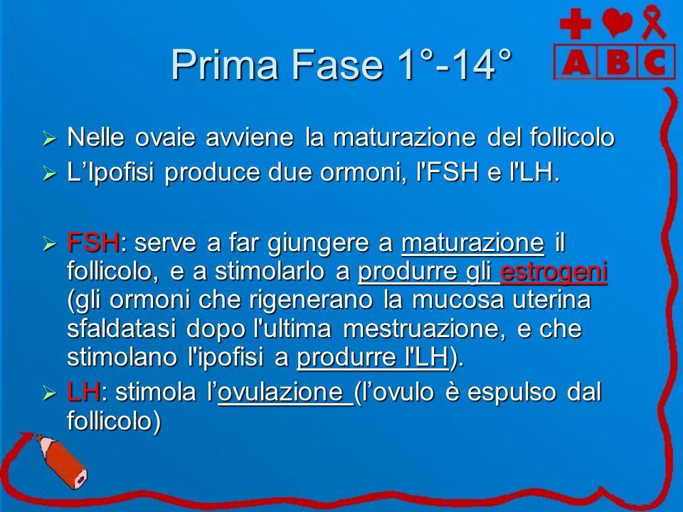 Prima Fase 1°-14° Nelle ovaie avviene la maturazione del follicolo Nelle ovaie avviene la maturazione del follicolo LIpofisi produce due ormoni, l'FSH