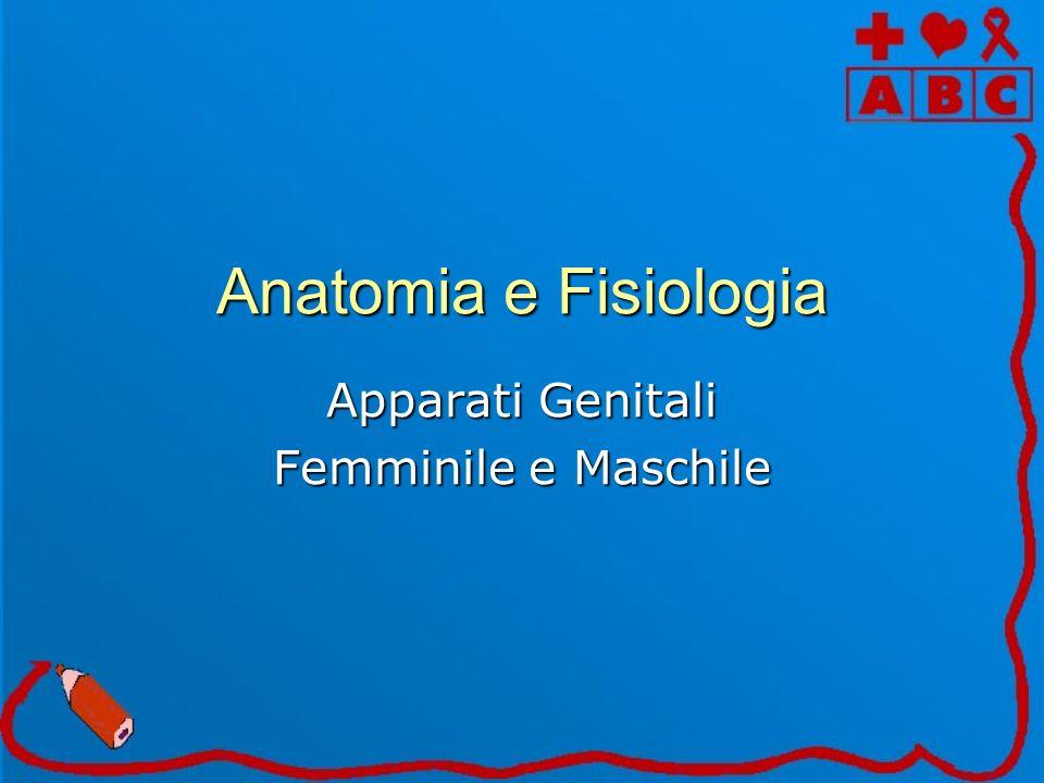Anatomia e Fisiologia Apparati Genitali Femminile e Maschile