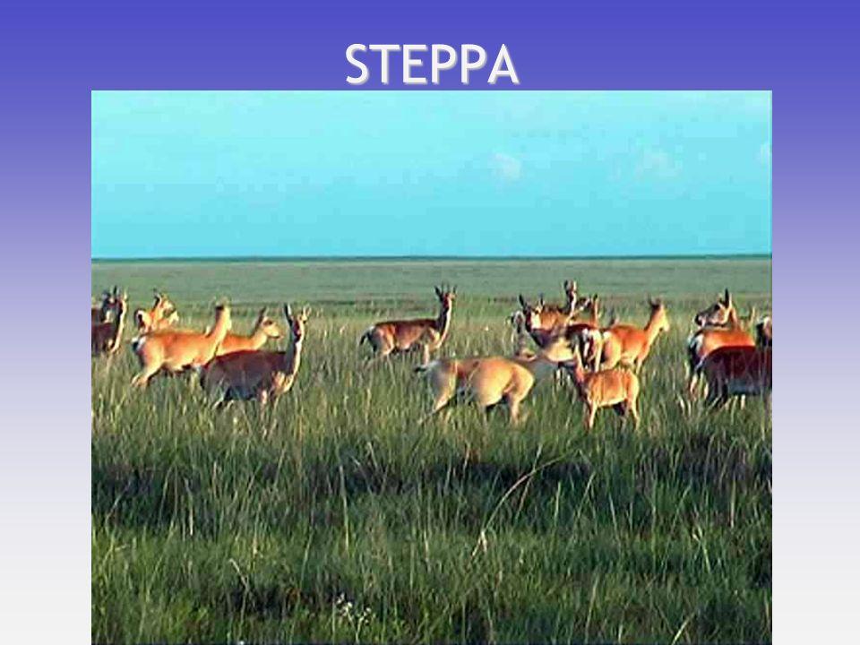 STEPPA
