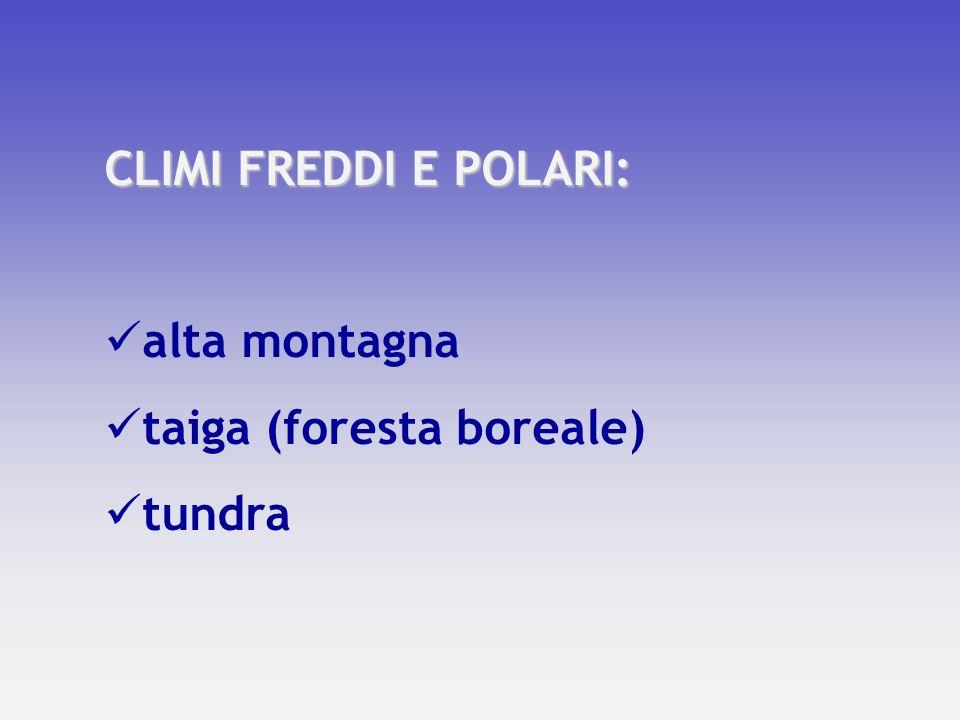 CLIMI FREDDI E POLARI: alta montagna taiga (foresta boreale) tundra