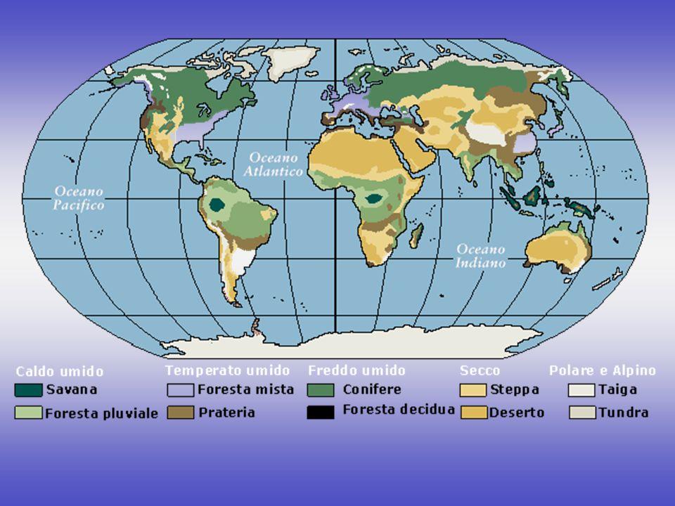 CLIMA TROPICALE - UMIDO: foresta pluviale o equatoriale savana