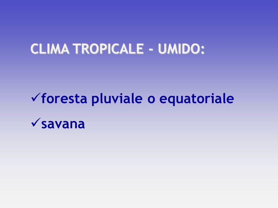 CLIMA TEMPERATO: macchia mediterranea prateria foresta di latifoglie