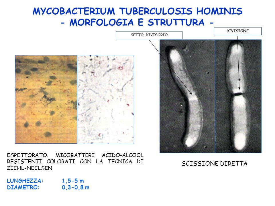 MYCOBACTERIUM TUBERCULOSIS HOMINIS - MORFOLOGIA E STRUTTURA - ESPETTORATO.