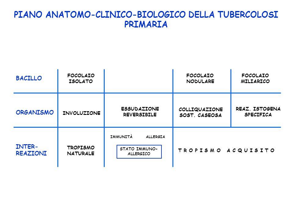PIANO ANATOMO-CLINICO-BIOLOGICO DELLA TUBERCOLOSI PRIMARIA FOCOLAIO ISOLATO FOCOLAIO NODULARE FOCOLAIO MILIARICO BACILLO ORGANISMO INVOLUZIONE ESSUDAZIONE REVERSIBILE COLLIQUAZIONE SOST.