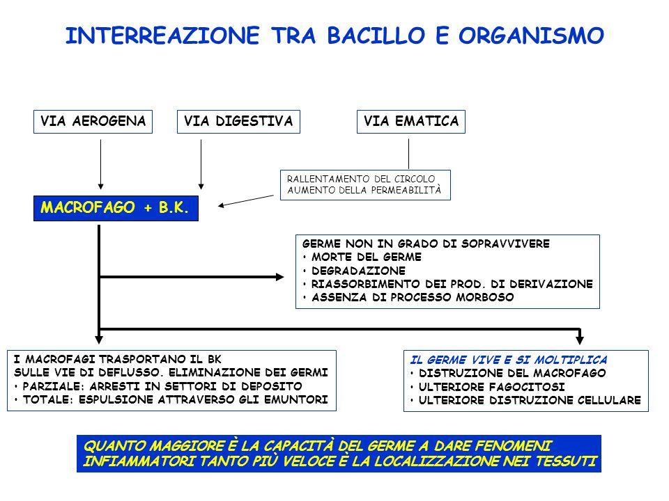 INTERREAZIONE TRA BACILLO E ORGANISMO VIA AEROGENAVIA DIGESTIVAVIA EMATICA MACROFAGO + B.K. RALLENTAMENTO DEL CIRCOLO AUMENTO DELLA PERMEABILITÀ GERME