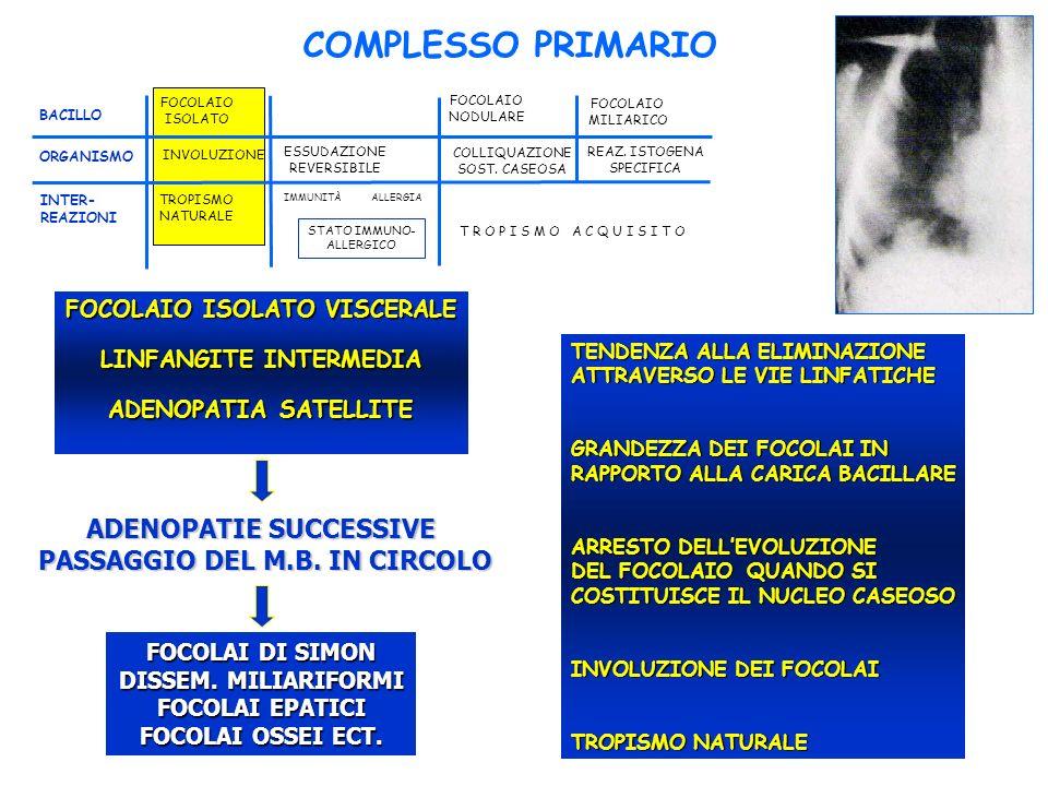 FOCOLAIO ISOLATO FOCOLAIO NODULARE FOCOLAIO MILIARICO BACILLO ORGANISMO INVOLUZIONE ESSUDAZIONE REVERSIBILE COLLIQUAZIONE SOST.