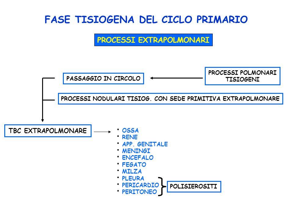 FASE TISIOGENA DEL CICLO PRIMARIO PROCESSI EXTRAPOLMONARI PROCESSI POLMONARI TISIOGENI PASSAGGIO IN CIRCOLO PROCESSI NODULARI TISIOG.