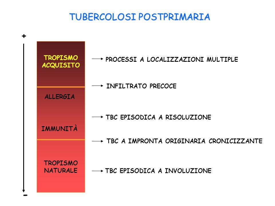 TUBERCOLOSI POSTPRIMARIA TROPISMO ACQUISITO TROPISMO NATURALE IMMUNITÀ ALLERGIA + - PROCESSI A LOCALIZZAZIONI MULTIPLE INFILTRATO PRECOCE TBC EPISODICA A RISOLUZIONE TBC A IMPRONTA ORIGINARIA CRONICIZZANTE TBC EPISODICA A INVOLUZIONE