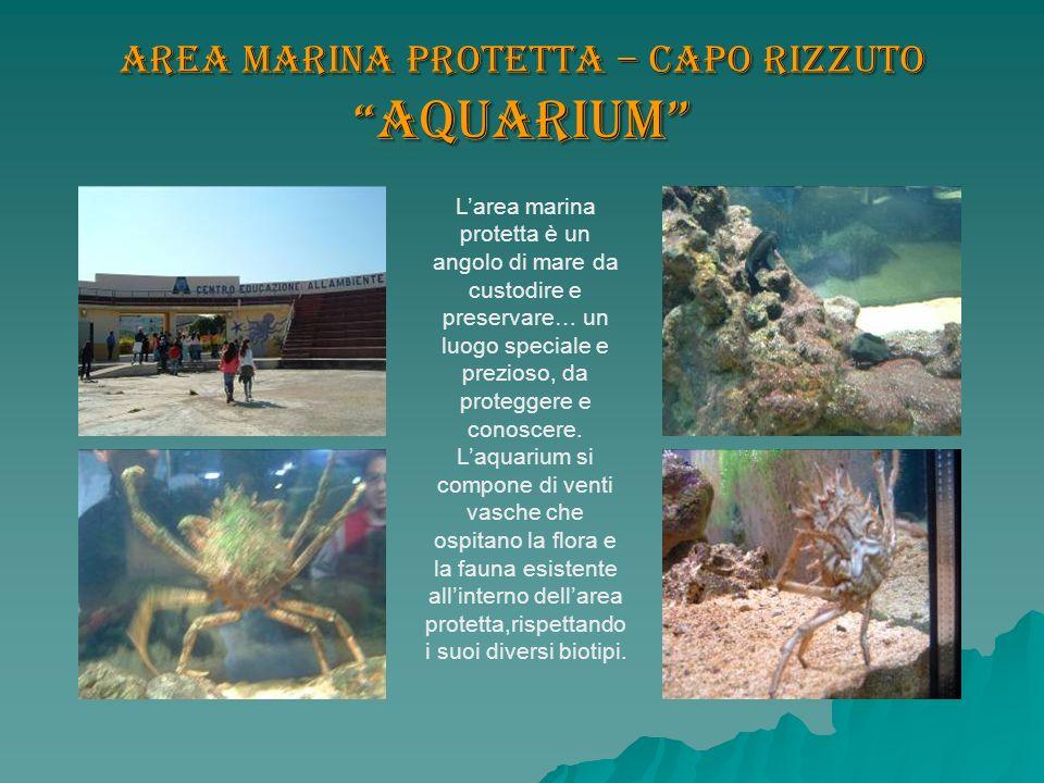 Area marina protetta – Capo Rizzuto Aquarium Larea marina protetta è un angolo di mare da custodire e preservare… un luogo speciale e prezioso, da pro