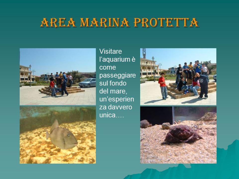 Area Marina Protetta Visitare laquarium è come passeggiare sul fondo del mare, unesperien za davvero unica….