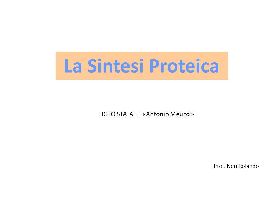 Prof. Neri Rolando La Sintesi Proteica LICEO STATALE «Antonio Meucci»