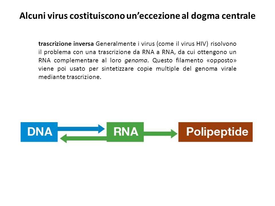 trascrizione inversa Generalmente i virus (come il virus HIV) risolvono il problema con una trascrizione da RNA a RNA, da cui ottengono un RNA complem