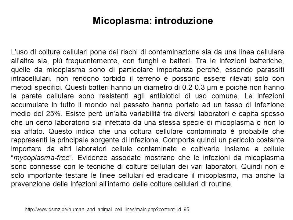 Micoplasma: prevalenza delle contaminazioni http://www.dsmz.de/human_and_animal_cell_lines/main.php?content_id=95 La prevalenza delle infezioni è molto più bassa per le colture primarie (1%) rispetto alle colture continue (15%-35%).