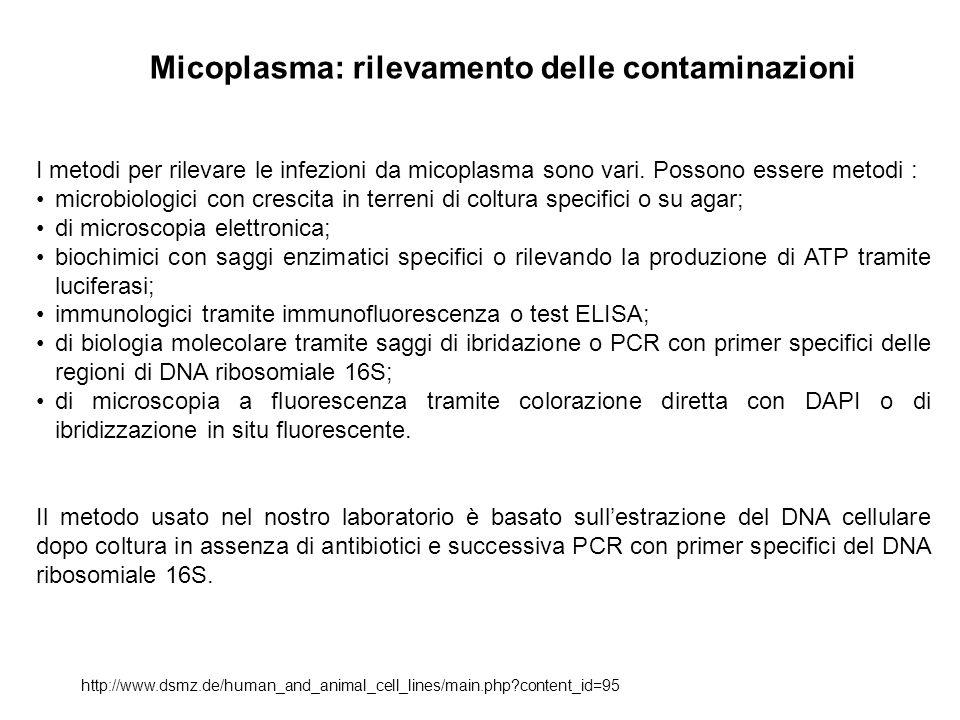 Micoplasma: rilevamento delle contaminazioni http://www.dsmz.de/human_and_animal_cell_lines/main.php?content_id=95 I metodi per rilevare le infezioni da micoplasma sono vari.