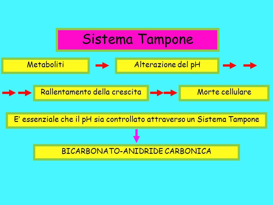 Sistema Tampone MetabolitiAlterazione del pH Rallentamento della crescitaMorte cellulare E essenziale che il pH sia controllato attraverso un Sistema
