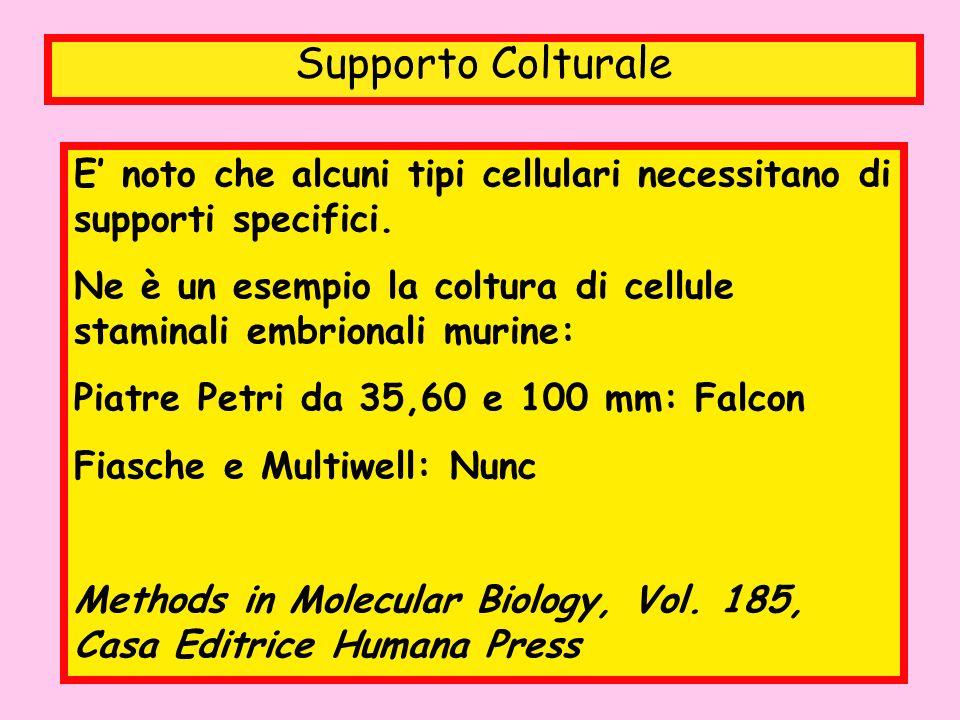 Supporto Colturale E noto che alcuni tipi cellulari necessitano di supporti specifici. Ne è un esempio la coltura di cellule staminali embrionali muri