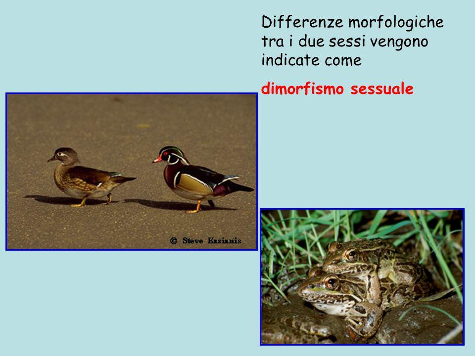Differenze morfologiche tra i due sessi vengono indicate come dimorfismo sessuale