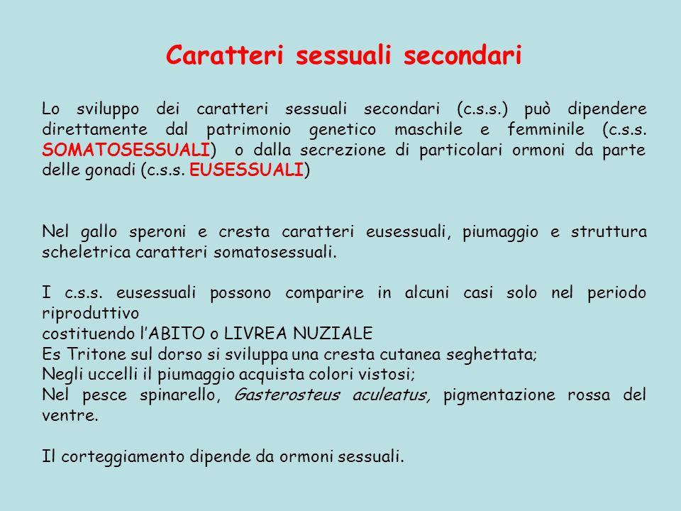 Caratteri sessuali secondari Lo sviluppo dei caratteri sessuali secondari (c.s.s.) può dipendere direttamente dal patrimonio genetico maschile e femmi