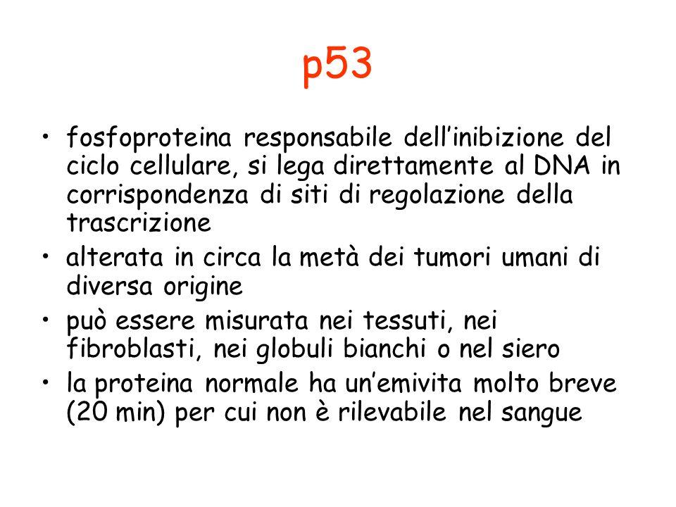 p53 fosfoproteina responsabile dellinibizione del ciclo cellulare, si lega direttamente al DNA in corrispondenza di siti di regolazione della trascriz
