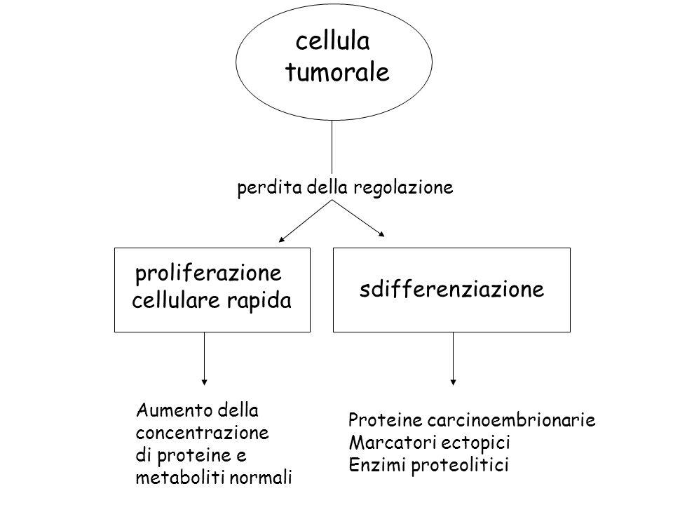 cellula tumorale proliferazione cellulare rapida sdifferenziazione Aumento della concentrazione di proteine e metaboliti normali Proteine carcinoembri