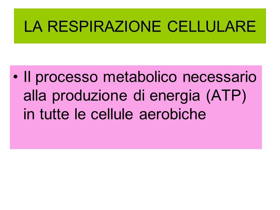 LA RESPIRAZIONE CELLULARE Il processo metabolico necessario alla produzione di energia (ATP) in tutte le cellule aerobiche