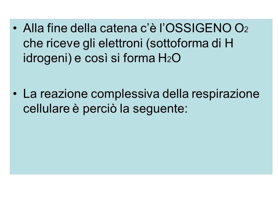 Alla fine della catena cè lOSSIGENO O 2 che riceve gli elettroni (sottoforma di H idrogeni) e così si forma H 2 O La reazione complessiva della respirazione cellulare è perciò la seguente: