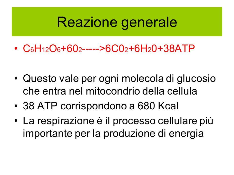 Reazione generale C 6 H 12 O 6 +60 2 ----->6C0 2 +6H 2 0+38ATP Questo vale per ogni molecola di glucosio che entra nel mitocondrio della cellula 38 AT