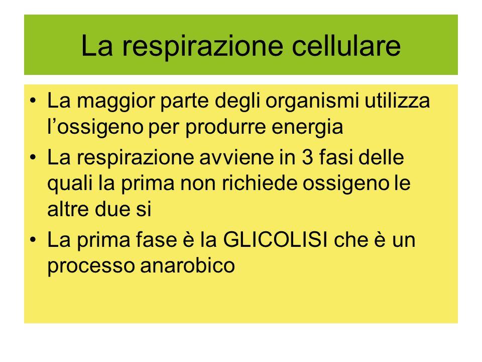 La respirazione cellulare La maggior parte degli organismi utilizza lossigeno per produrre energia La respirazione avviene in 3 fasi delle quali la prima non richiede ossigeno le altre due si La prima fase è la GLICOLISI che è un processo anarobico
