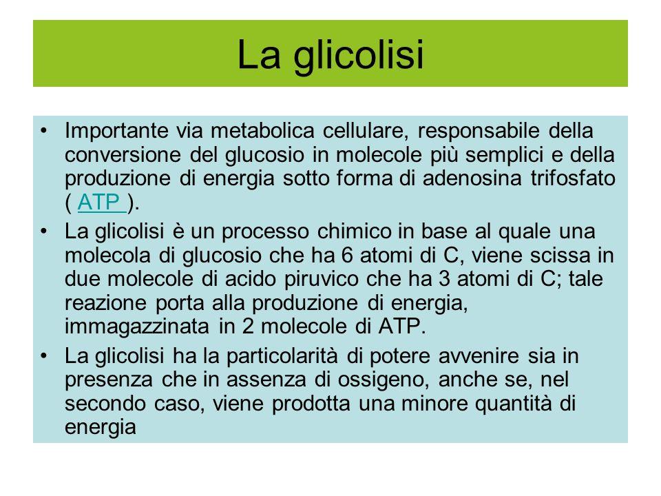 La glicolisi Importante via metabolica cellulare, responsabile della conversione del glucosio in molecole più semplici e della produzione di energia sotto forma di adenosina trifosfato ( ATP ).