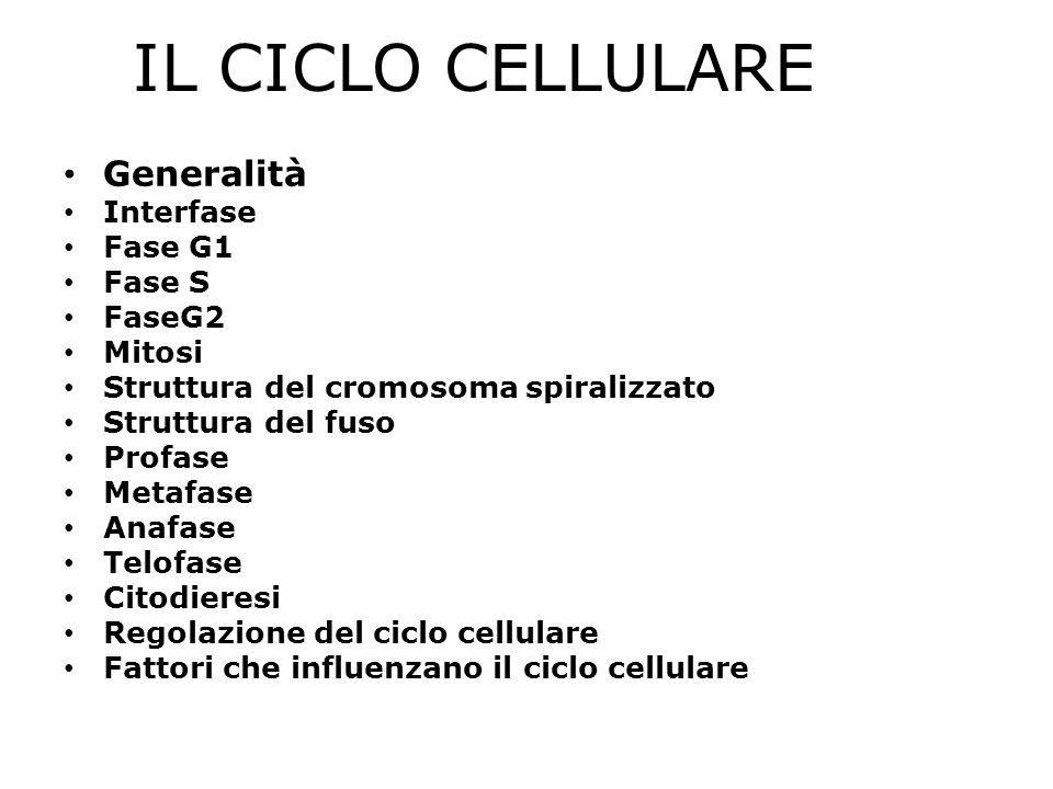 IL CICLO CELLULARE Generalità Interfase Fase G1 Fase S FaseG2 Mitosi Struttura del cromosoma spiralizzato Struttura del fuso Profase Metafase Anafase