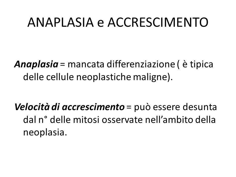 ANAPLASIA e ACCRESCIMENTO Anaplasia = mancata differenziazione ( è tipica delle cellule neoplastiche maligne). Velocità di accrescimento = può essere