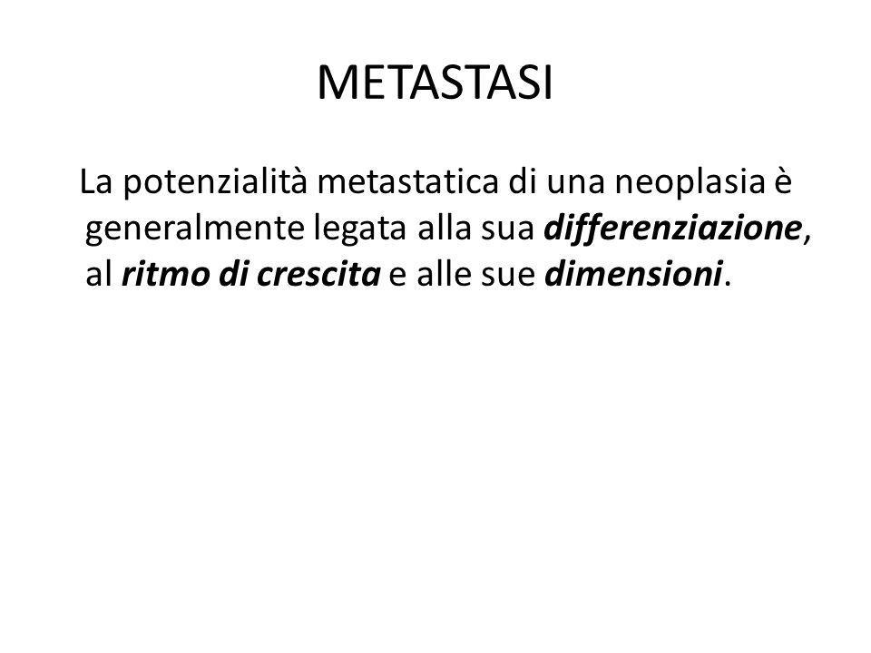 METASTASI La potenzialità metastatica di una neoplasia è generalmente legata alla sua differenziazione, al ritmo di crescita e alle sue dimensioni.
