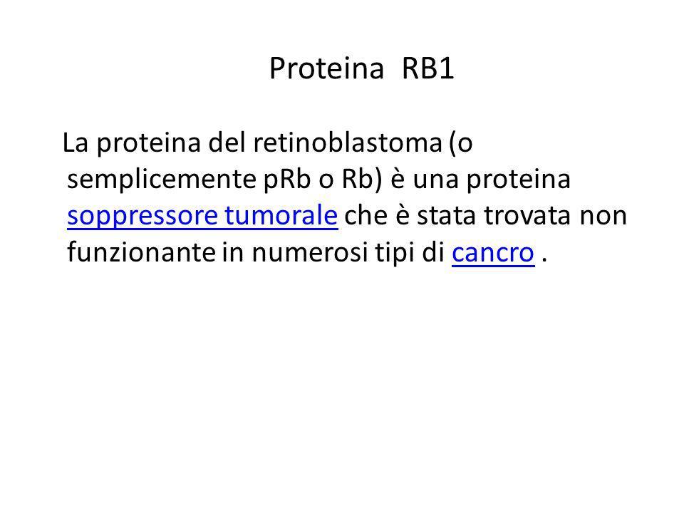 Proteina RB1 La proteina del retinoblastoma (o semplicemente pRb o Rb) è una proteina soppressore tumorale che è stata trovata non funzionante in nume