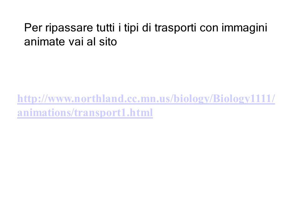 http://www.northland.cc.mn.us/biology/Biology1111/ animations/transport1.html Per ripassare tutti i tipi di trasporti con immagini animate vai al sito