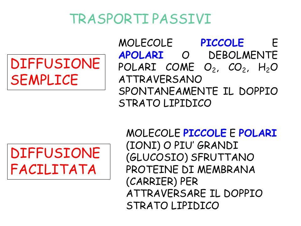TRASPORTI PASSIVI DIFFUSIONE SEMPLICE MOLECOLE PICCOLE E APOLARI O DEBOLMENTE POLARI COME O 2, CO 2, H 2 O ATTRAVERSANO SPONTANEAMENTE IL DOPPIO STRATO LIPIDICO DIFFUSIONE FACILITATA MOLECOLE PICCOLE E POLARI (IONI) O PIU GRANDI (GLUCOSIO) SFRUTTANO PROTEINE DI MEMBRANA (CARRIER) PER ATTRAVERSARE IL DOPPIO STRATO LIPIDICO