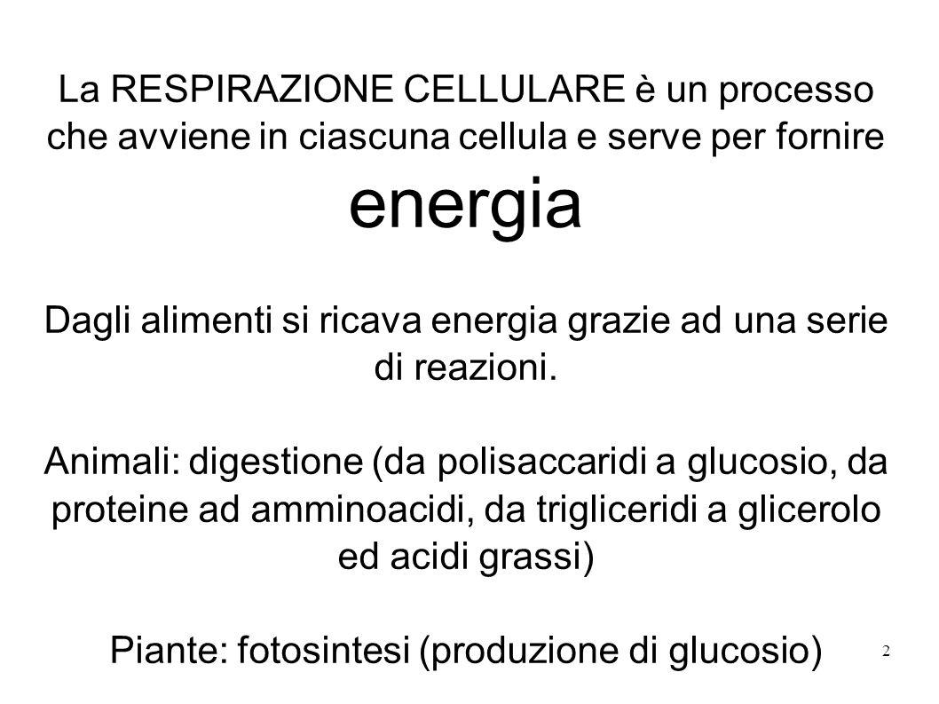 2 La RESPIRAZIONE CELLULARE è un processo che avviene in ciascuna cellula e serve per fornire energia Dagli alimenti si ricava energia grazie ad una s