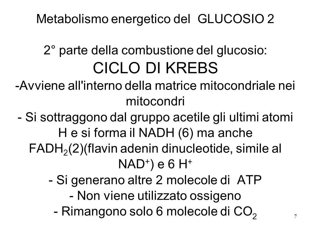 7 Metabolismo energetico del GLUCOSIO 2 2° parte della combustione del glucosio: CICLO DI KREBS -Avviene all'interno della matrice mitocondriale nei m