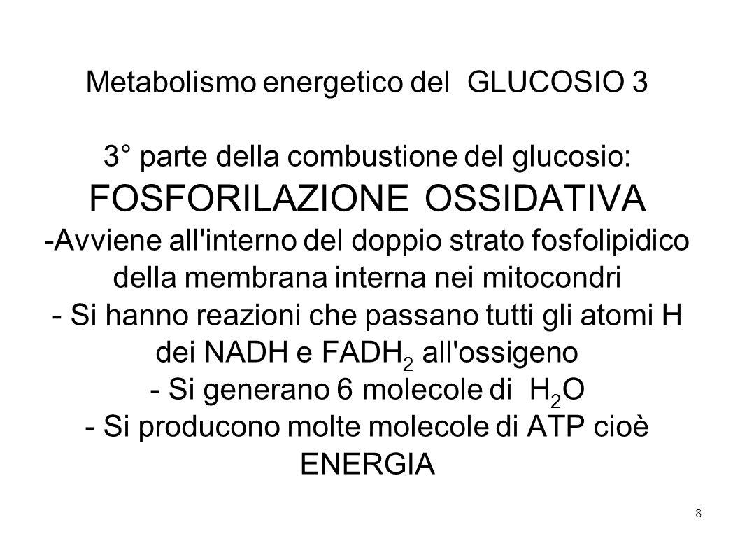 8 Metabolismo energetico del GLUCOSIO 3 3° parte della combustione del glucosio: FOSFORILAZIONE OSSIDATIVA -Avviene all'interno del doppio strato fosf