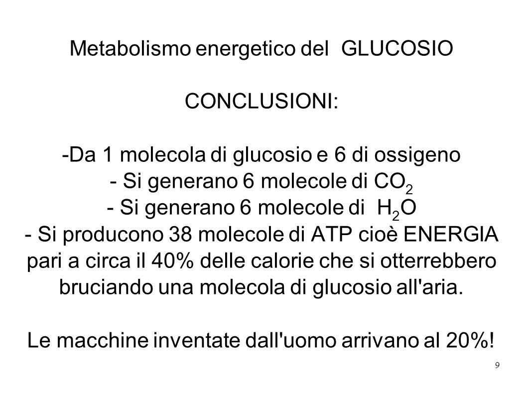 9 Metabolismo energetico del GLUCOSIO CONCLUSIONI: -Da 1 molecola di glucosio e 6 di ossigeno - Si generano 6 molecole di CO 2 - Si generano 6 molecol