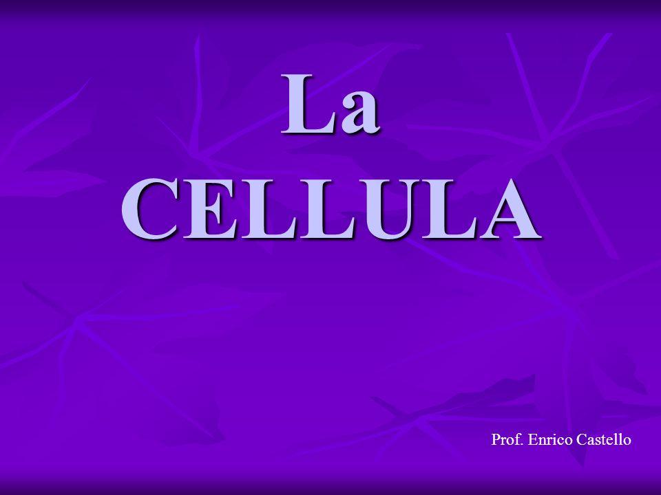 La CELLULA Prof. Enrico Castello